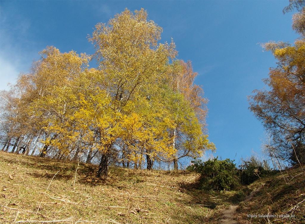 Дерево по дороге на Бутаковку 2018