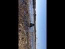 Весна охота на гуся Алтай
