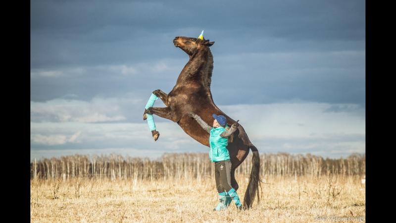 Стрим 59.RU: В гостях у дрессированного коня Барсика. Смотрим, на что он способен