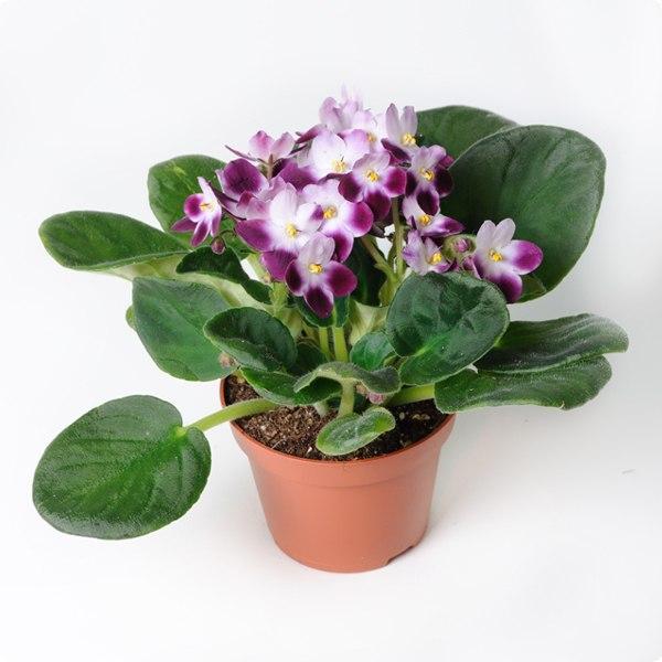 Название цветов растение картинки и названия