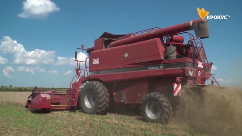 На полях киплять жнива. Білоцерківські аграрії очікують врожай більший, ніж торік.