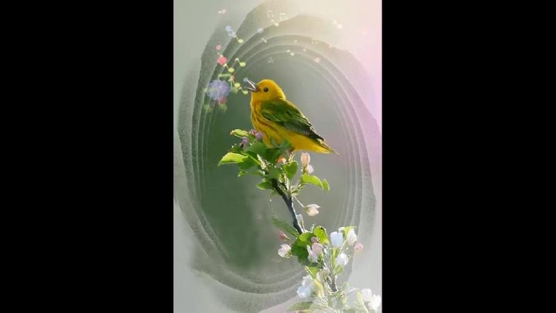 Image (птичка