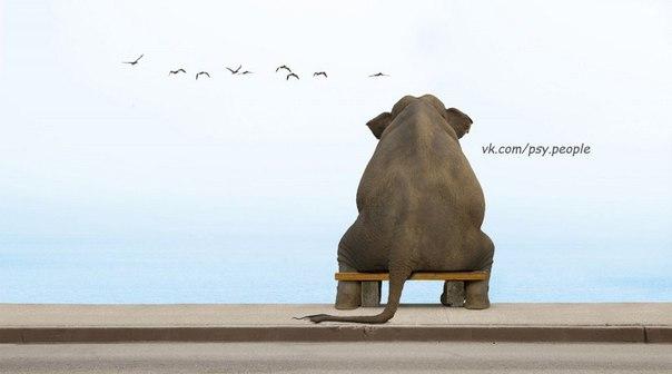 Китайская мудрость 1. Путешествие в тысячу ли начинается с одного шага. 2. Тот, кто указывает на твои недостатки, не всегда твой враг; тот, кто говорит о твоих достоинствах, не всегда твой друг. 3. Искушение сдаться будет особенно сильным незадолго до победы. 4. Не бойся медлить, бойся остановиться. 5. Хитрость жизни в том, чтобы умереть молодым, но как можно позже. 6. Не говорите, если это не изменяет тишину к лучшему. 7. Сильный преодолеет преграду, мудрый — весь путь. 8. Хижина, где…
