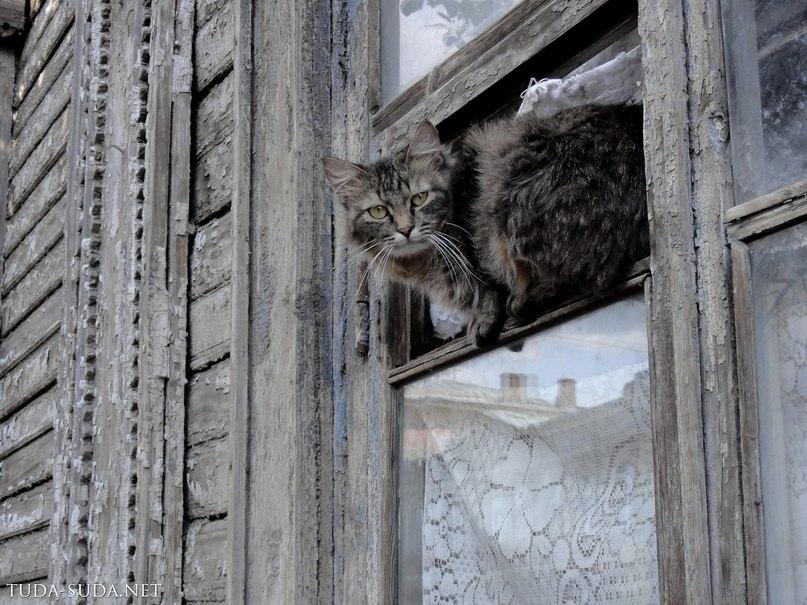 Коты,старый город Самара