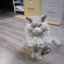 Кот Альберт(назван в честь Альберта Эйнштейна) добрый и отзывчивый. Просто так получилось…