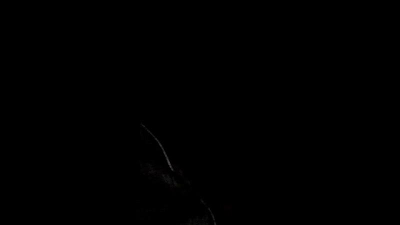 МОПС ДЯДЯ ПЁС, МАЛЫШ, ХОЧУ ПОЖРАТЬ, СТРИМ * ВЕЧЕРНИЙ СТАРК 16/10/2018