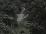 Тропический лес Индии