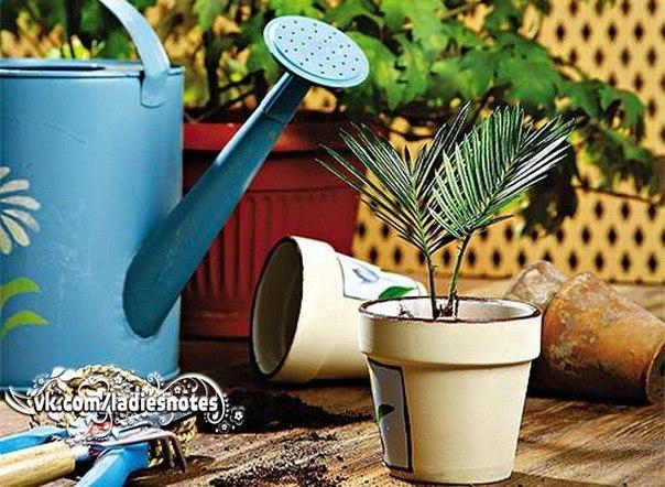 Садоводство и цветы IIryX526HjE