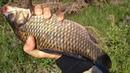 За крупным карасем в рай Шикарная рыбалка карась на поплавок AGAT production