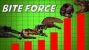 Dinosaur Bite Force Comparison Theropods