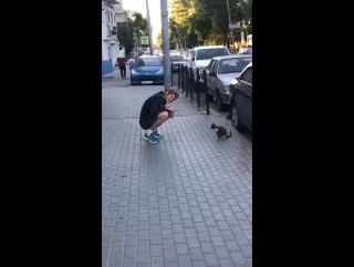Нел не любит котов 😂