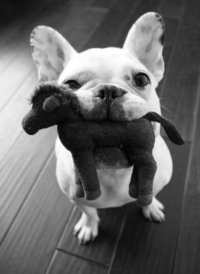 25 причин не заводить собаку GCuPp95pXmE