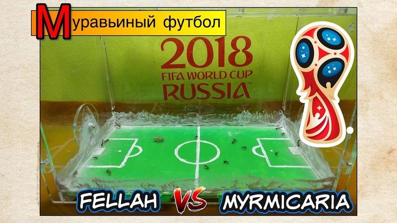 Муравьиный футбол ● Fellah VS Myrmicaria ● FIFA 2018