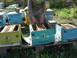 Пчеловодство.Объединение 3 в 1