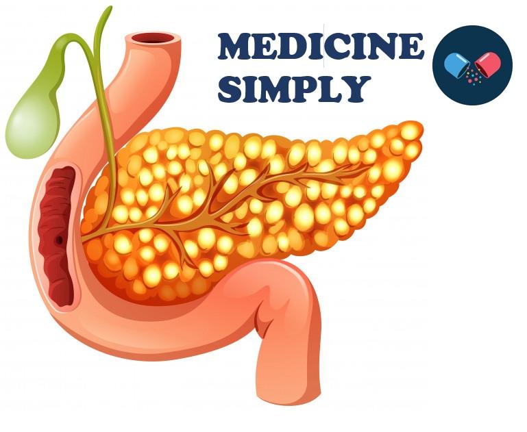 Где находится поджелудочная железа, лекарства для поджелудочной железы,Поджелудочная железа и ее роль, роль поджелудочной железы