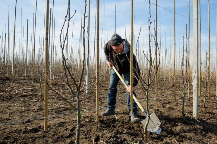 В Прикубанском и Зеленчукском районах могут посадить более 1 млн деревьев