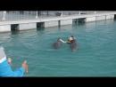 Дельфинарий Куба 3