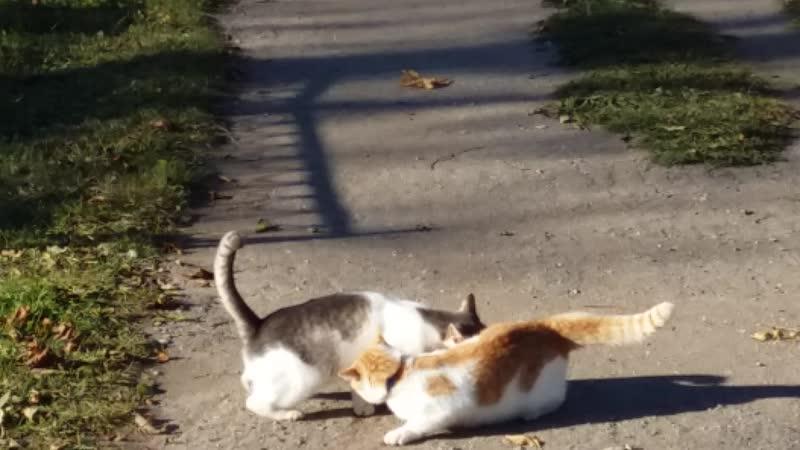 Ми-ми-мишное видео из д. Опоки