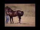 лошадка танцы