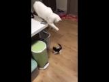 Игра с котёнком