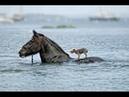 Любовь в действии. Взаимопомощь живых существ.