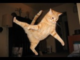 Best Funny Cats Jump Fails Compilation 2014