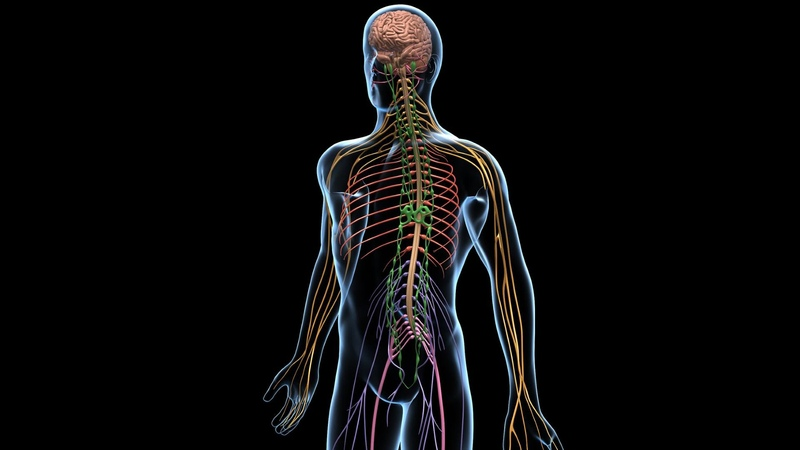 7. Нервная система автономная заболевания (8 класс) - биология, подготовка к ЕГЭ ... 7. ythdyfz cbcntvf fdnjyjvyfz pf,jkt