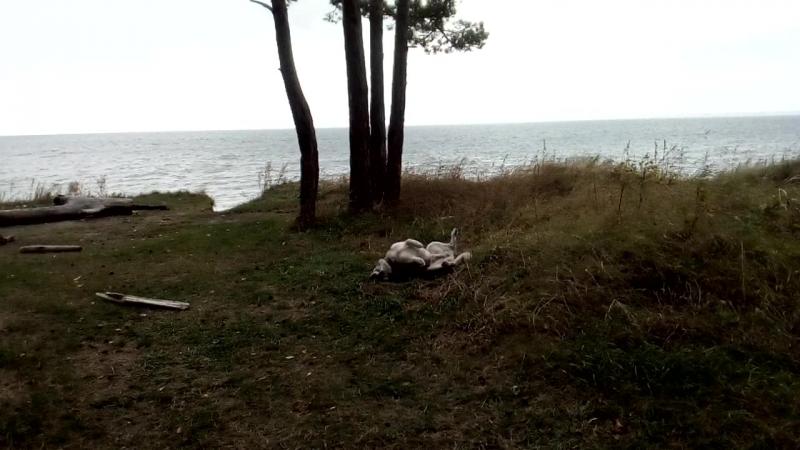 просто осень просто море и собака