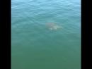 Покатай меня, большая черепаха))