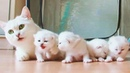Proud Cat Mom And Her Precious Little Baby Kittens