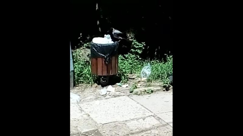 умная ворона раскрывает пакет с мусором