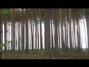 Штрих код леса