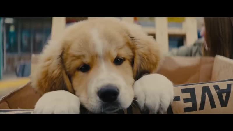 Собачья жизнь 2 Русский трейлер 2019