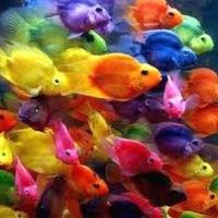 0687d7305e19b8 акваріумні рибки | ВКонтакте