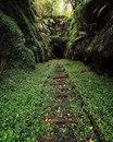 Заброшенный тоннель в Хеленсбурге, Австралия, в котором живет колония светлячков.