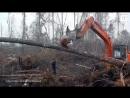 В Индонезии орангутанг кинулся на экскаватор незаконных лесорубов, который сносил его дом. Восстание обезьян все ближе