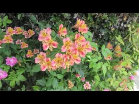 Путешествия Франция Бретань Природа Цветы Полисады Дома