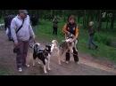 Чтобы посмотреть гонки в собачьих упряжках, не обязательно ехать на Север - Первый канал