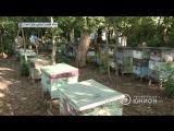 Пчеловодство в ДНР. Как пасечники разводят пчел и есть ли в Республике натуральн.2018