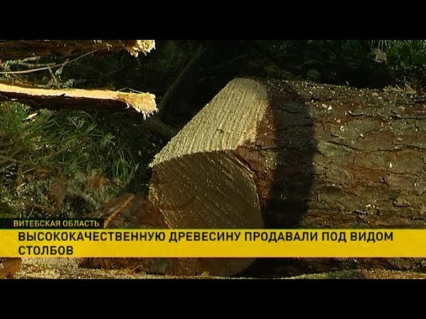 Запрещённую к вывозу древесину продавали под видом элементов забора