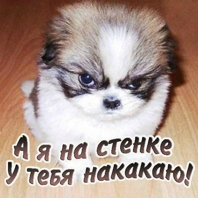 Аня Жосан, 21 декабря 1999, Житомир, id198850725