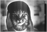 Картинки на аву - Аватары - Скачать. книги о домашних животных 3 класс.