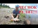 Рыбалка на ФИДЕР на АМУРЕ Ловим НА ЧЕСНОК летом