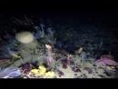 подводная арктика