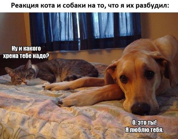 http://cs14102.vk.me/c540100/v540100340/2f718/nnv_nc4udes.jpg