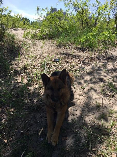 Пропала собака районе Химпоселка! Кто видел просьба сообщить 073472710