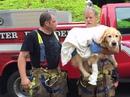 Собака-поводырь бросилась под автобус, чтобы спасти свою слепую хозяйку