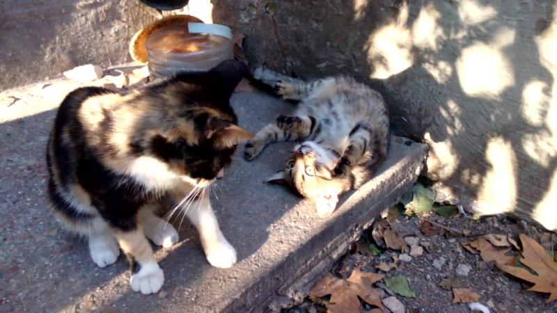 Котята , Острякова