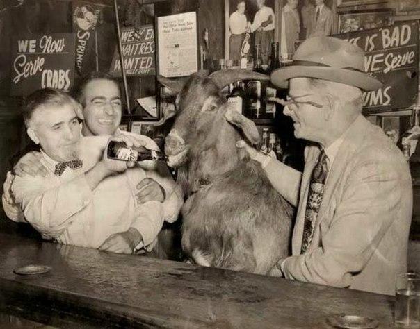 «Чикаго Кабс» и проклятие козы Билли.