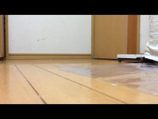 ごきげんさんわせぉ coub
